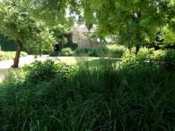17 Secret Gardens of Venice - Oudolf-Vergini-2
