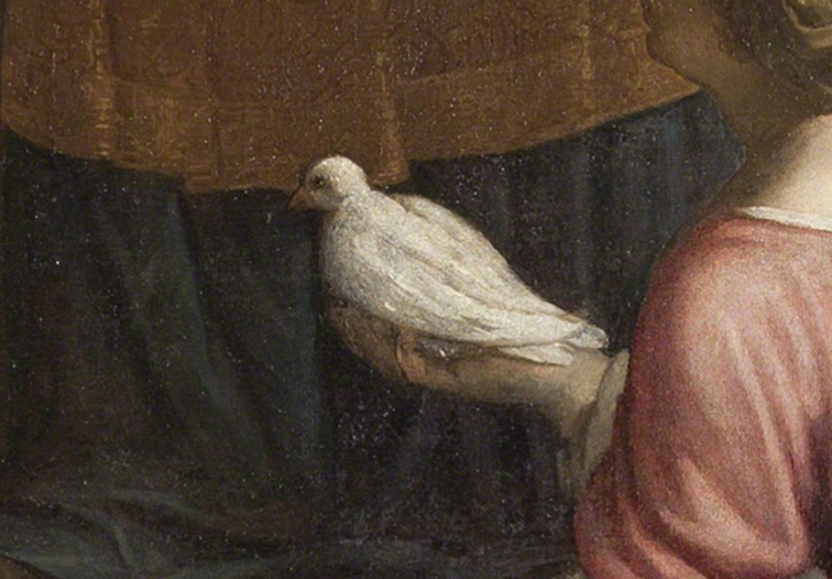 picture 9 - white Pigeon (detail) by Palma il Giovanne
